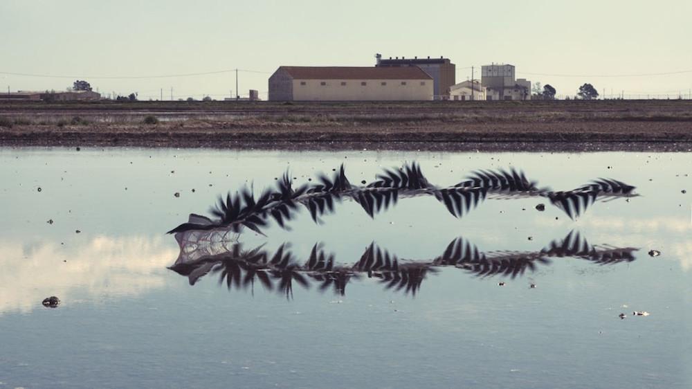 Η χρονοφωτογραφία δίνει άλλη οπτική στο πέταγμα των πουλιών